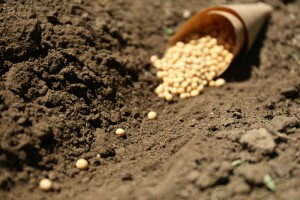 The Difference Between Sowing and Growing